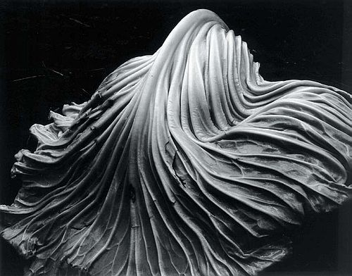 Cabbage Leaf by Edward Weston, 1931